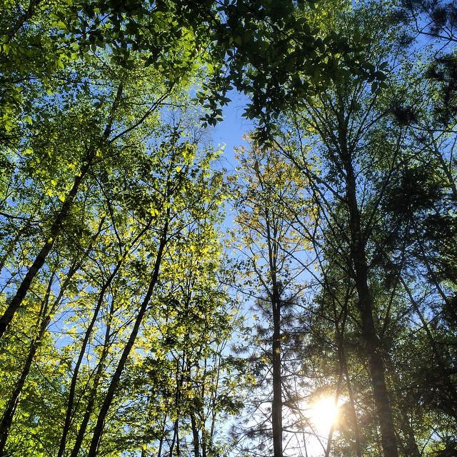 #nature #zen #zenitude #silence #beauté #arbres