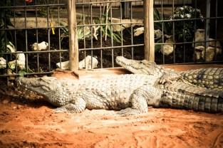 Ferme aux Crocodiles Rhone Alpes 2015