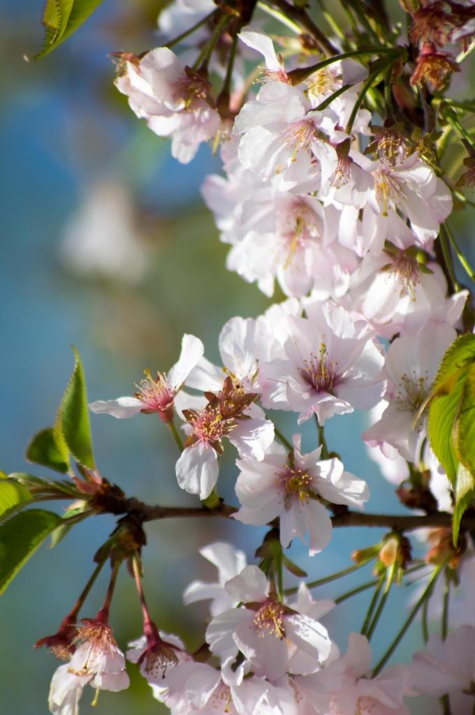 fleurs printemps 2015 omi photo photographe sur lyon omi photographe photos artistiques. Black Bedroom Furniture Sets. Home Design Ideas